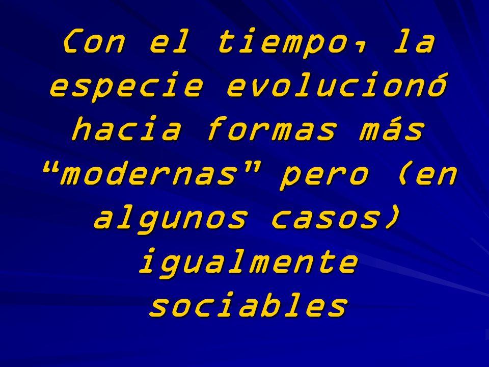 Con el tiempo, la especie evolucionó hacia formas más modernas pero (en algunos casos) igualmente sociables