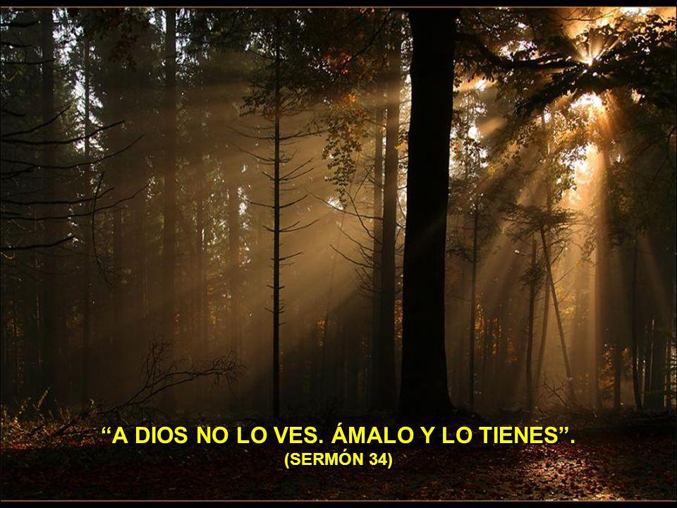 A DIOS NO LO VES. ÁMALO Y LO TIENES . (SERMÓN 34)