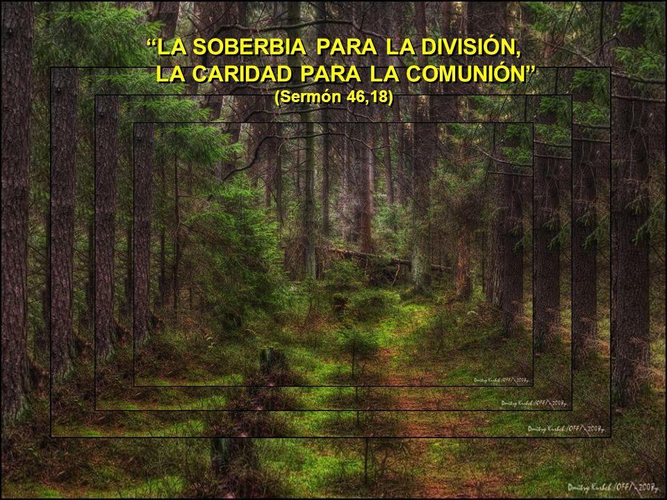 LA SOBERBIA PARA LA DIVISIÓN, LA CARIDAD PARA LA COMUNIÓN (Sermón 46,18)
