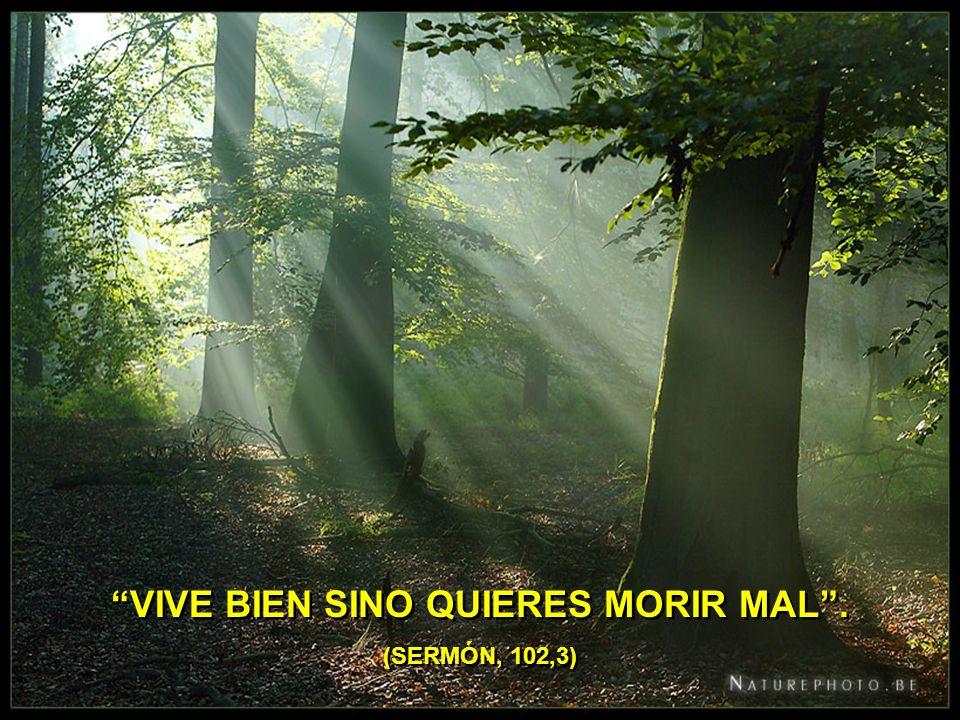 VIVE BIEN SINO QUIERES MORIR MAL . (SERMÓN, 102,3)