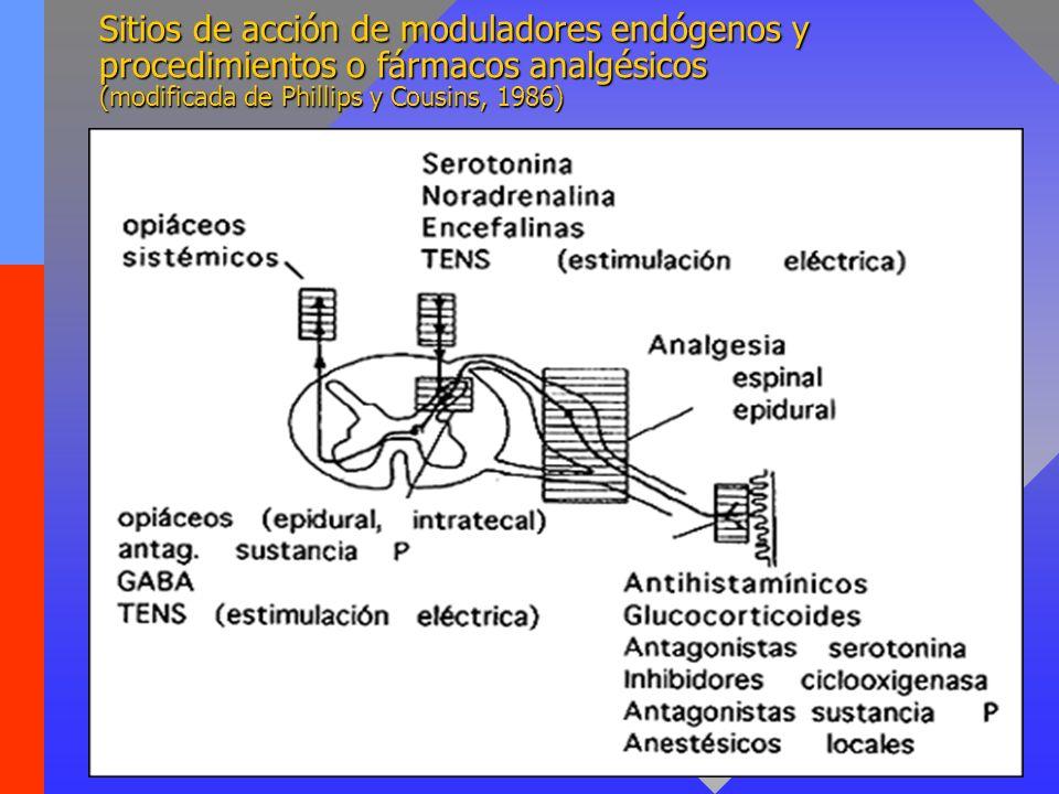 Sitios de acción de moduladores endógenos y procedimientos o fármacos analgésicos (modificada de Phillips y Cousins, 1986)