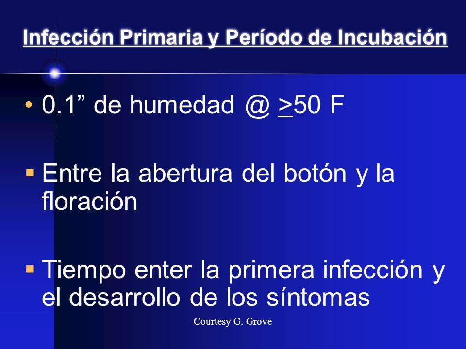 Infección Primaria y Período de Incubación