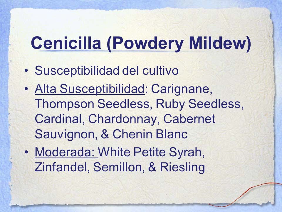 Cenicilla (Powdery Mildew)