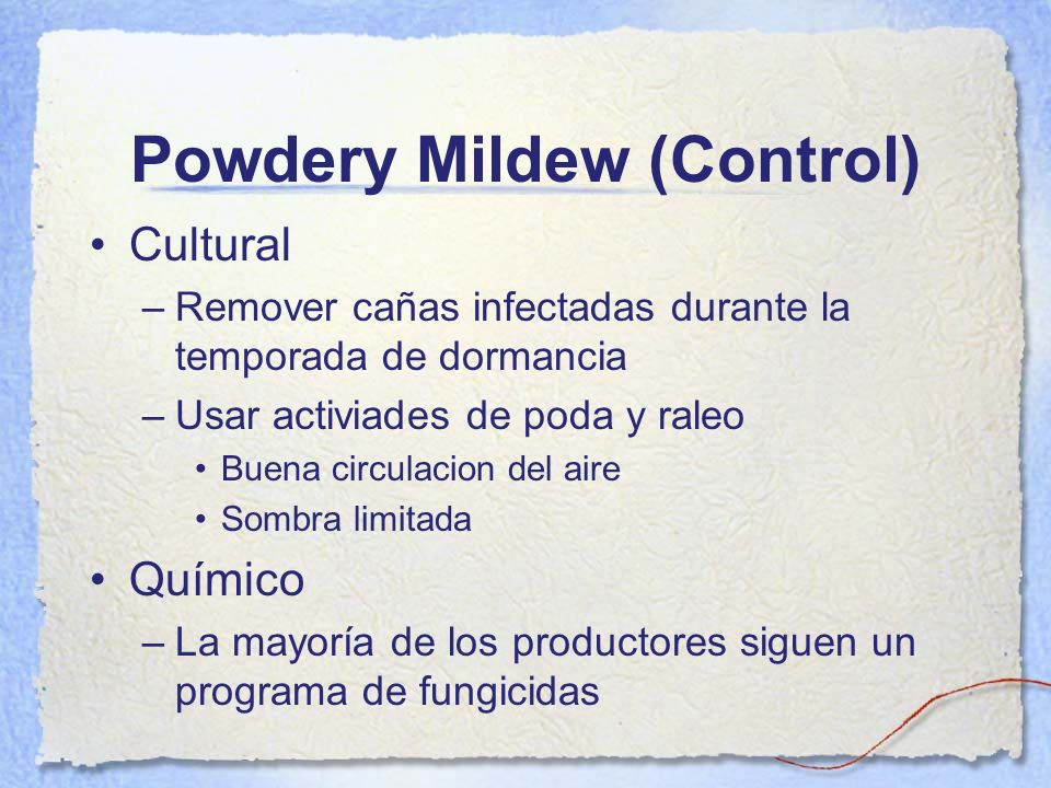 Powdery Mildew (Control)