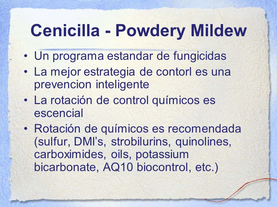 Cenicilla - Powdery Mildew
