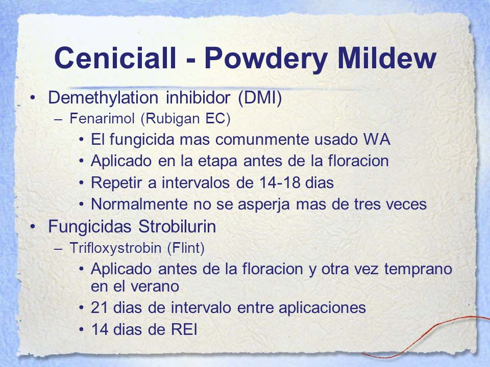 Ceniciall - Powdery Mildew