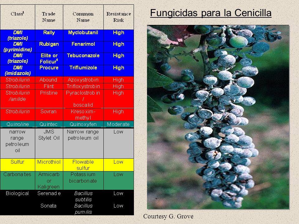 Fungicidas para la Cenicilla