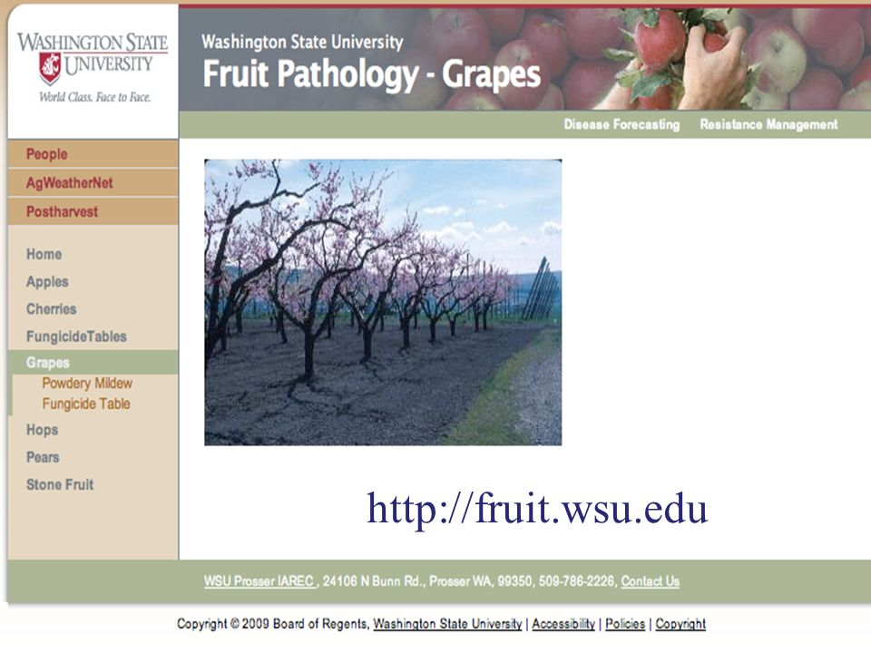 http://fruit.wsu.edu 30