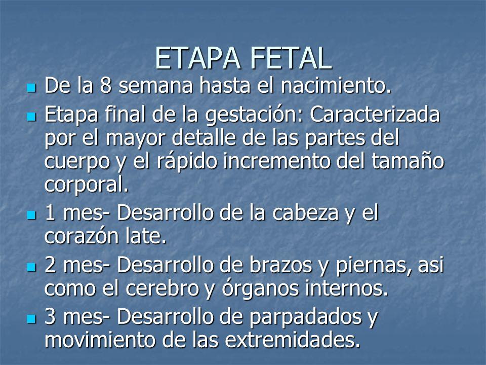 ETAPA FETAL De la 8 semana hasta el nacimiento.