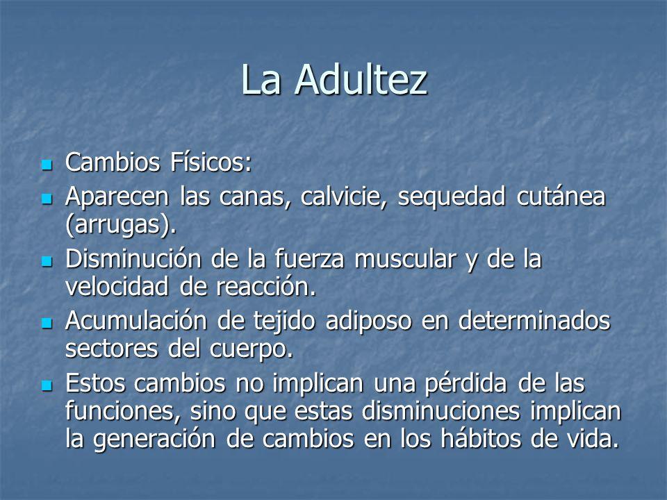 La Adultez Cambios Físicos: