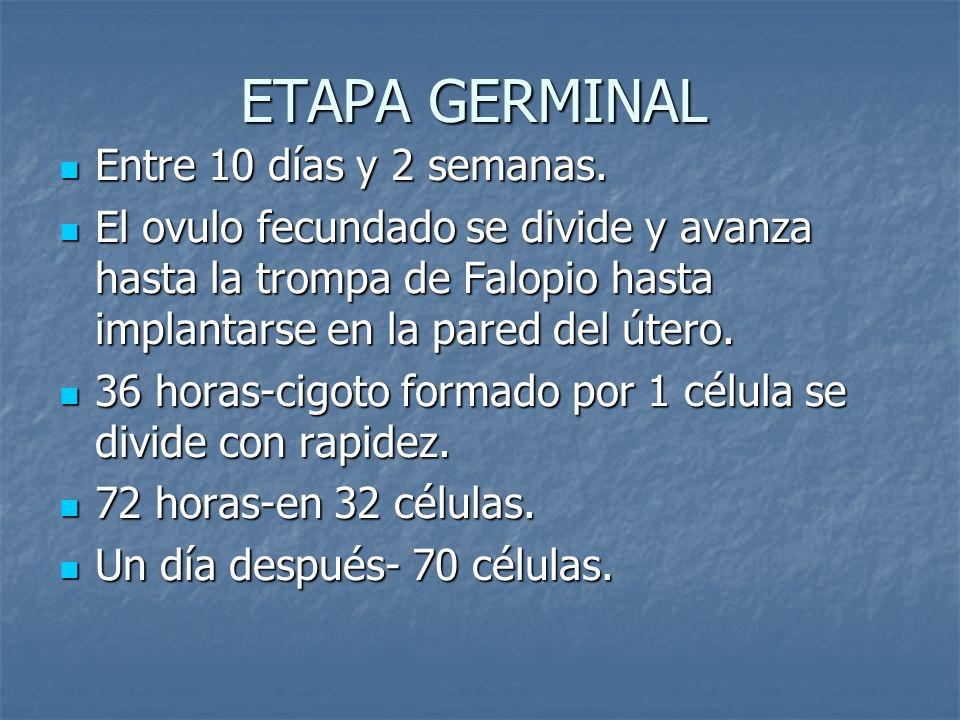 ETAPA GERMINAL Entre 10 días y 2 semanas.