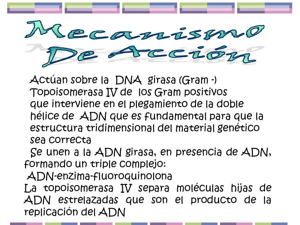 Mecanismo De Acción Actúan sobre la DNA girasa (Gram -)