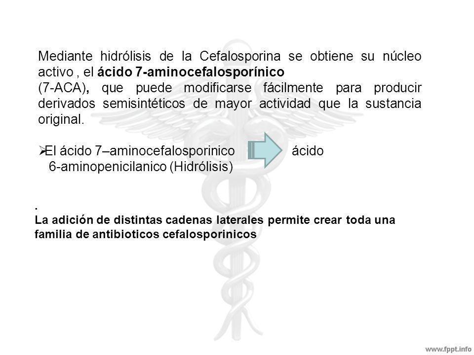 El ácido 7–aminocefalosporinico ácido 6-aminopenicilanico (Hidrólisis)