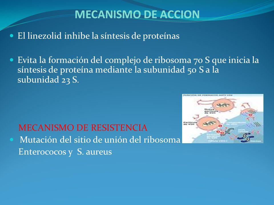 MECANISMO DE ACCION El linezolid inhibe la síntesis de proteínas