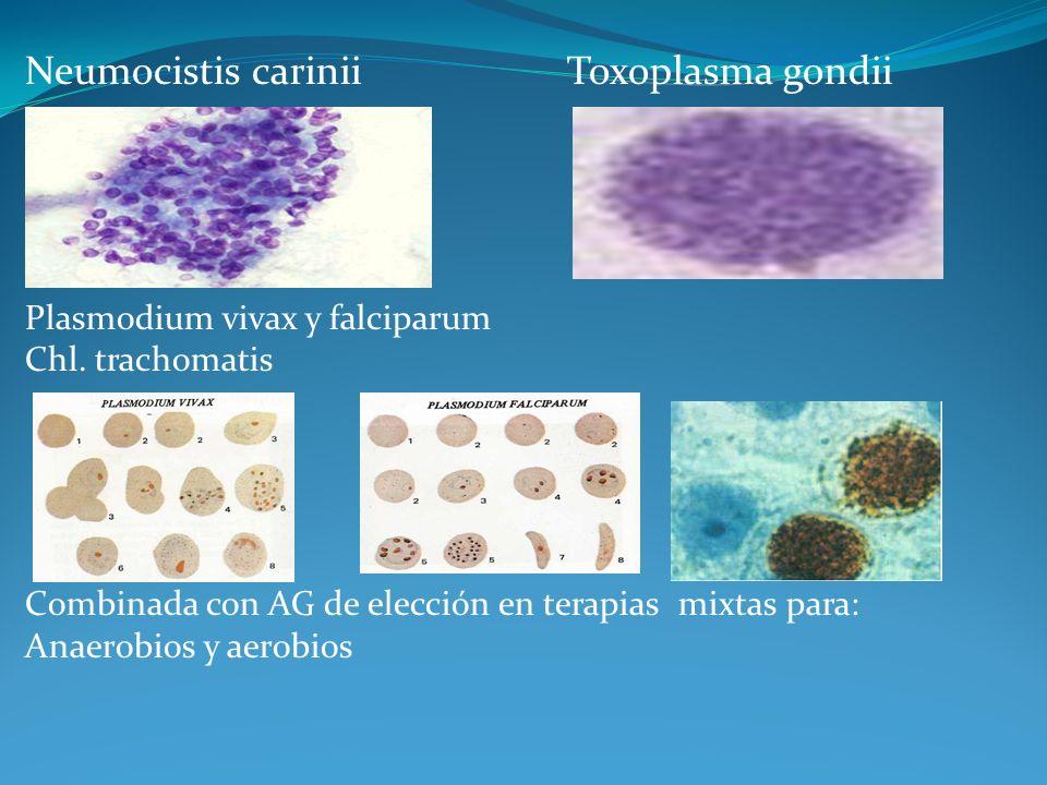 Neumocistis carinii Toxoplasma gondii