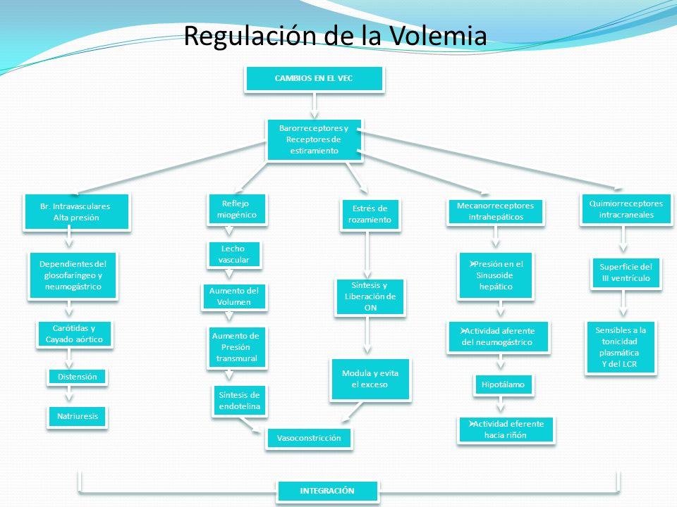 Regulación de la Volemia