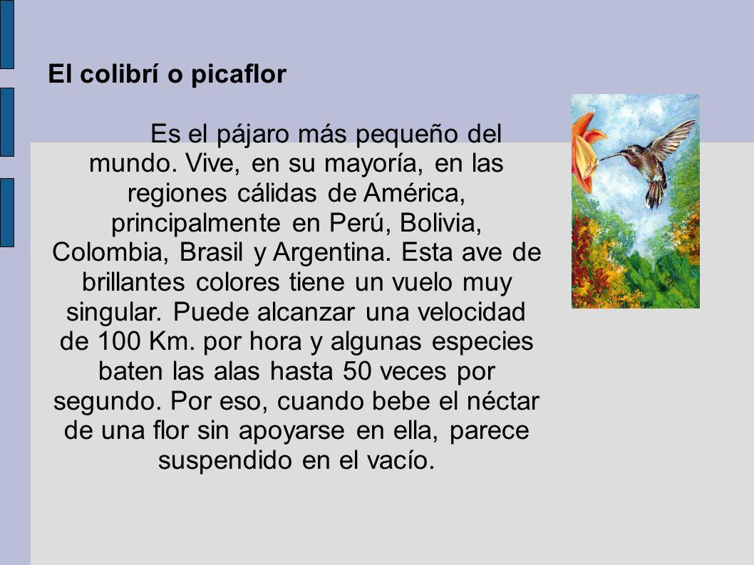 El colibrí o picaflor