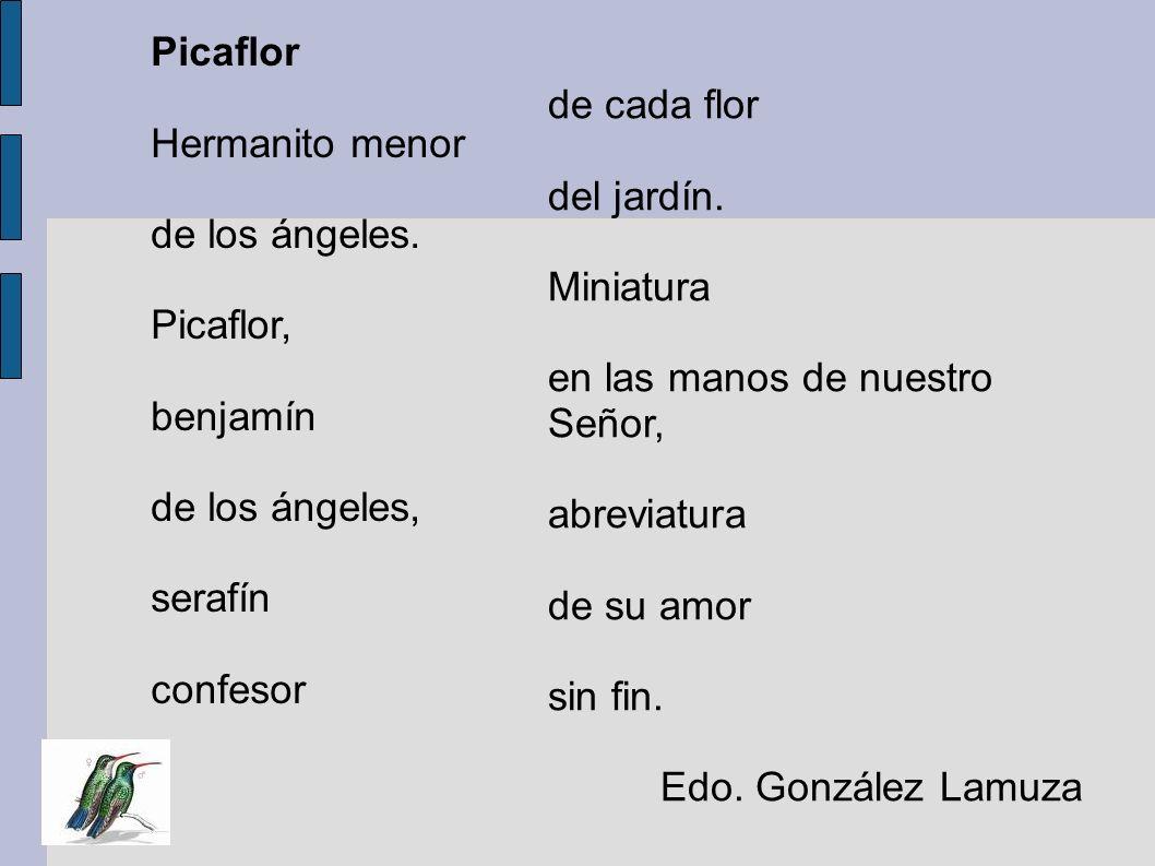 PicaflorHermanito menor. de los ángeles. Picaflor, benjamín. de los ángeles, serafín. confesor. de cada flor.