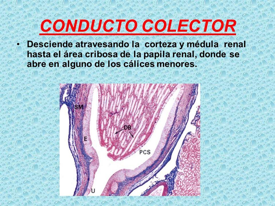 CONDUCTO COLECTOR