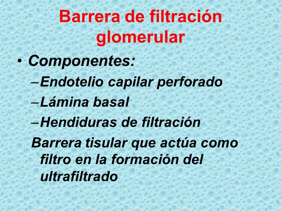 Barrera de filtración glomerular