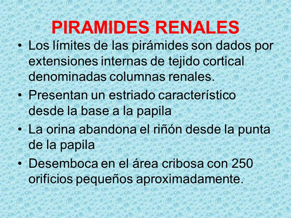 PIRAMIDES RENALES Los límites de las pirámides son dados por extensiones internas de tejido cortical denominadas columnas renales.