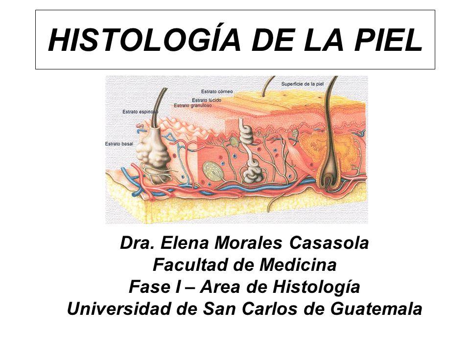 HISTOLOGÍA DE LA PIEL Dra. Elena Morales Casasola Facultad de Medicina