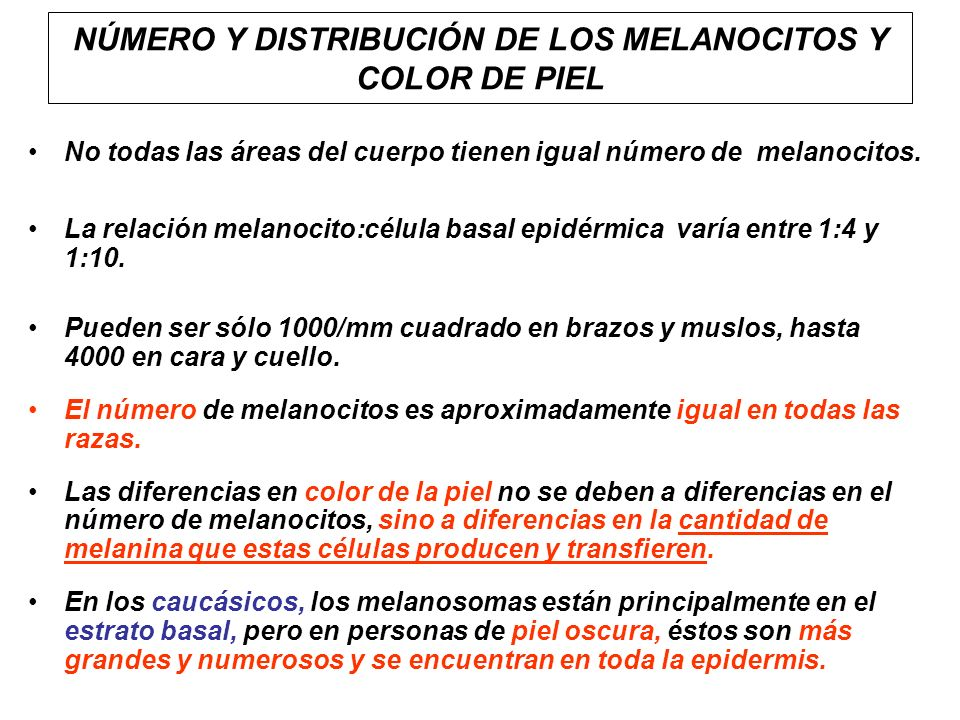NÚMERO Y DISTRIBUCIÓN DE LOS MELANOCITOS Y COLOR DE PIEL