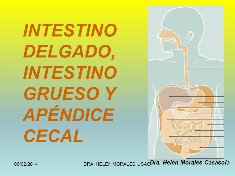 INTESTINO DELGADO, INTESTINO GRUESO Y APÉNDICE CECAL
