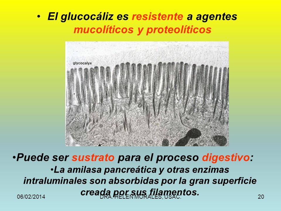 El glucocáliz es resistente a agentes mucolíticos y proteolíticos