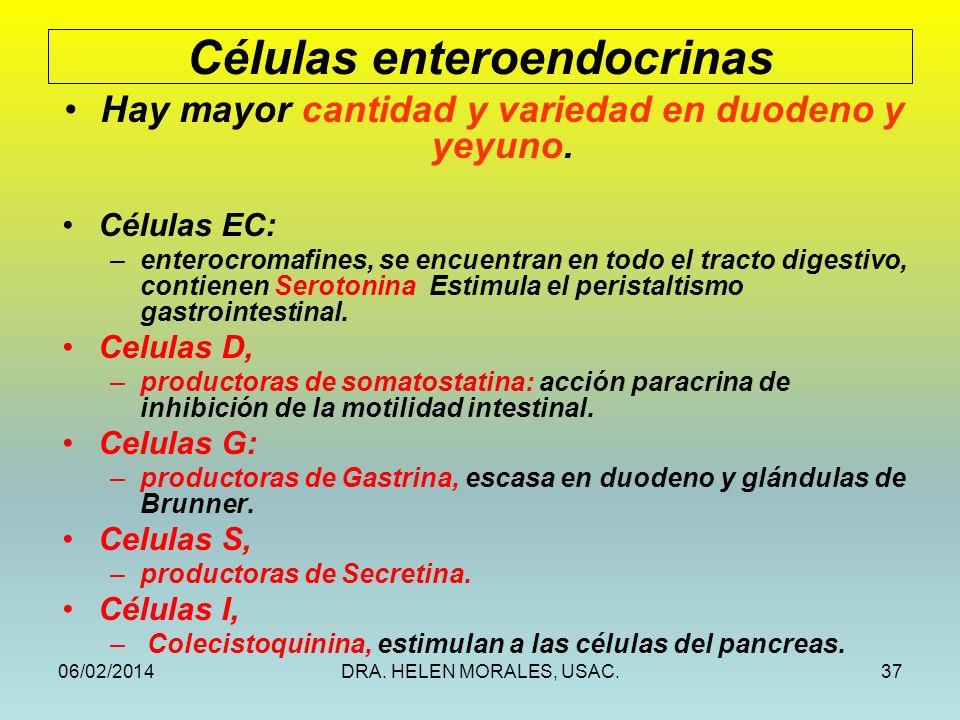 Células enteroendocrinas