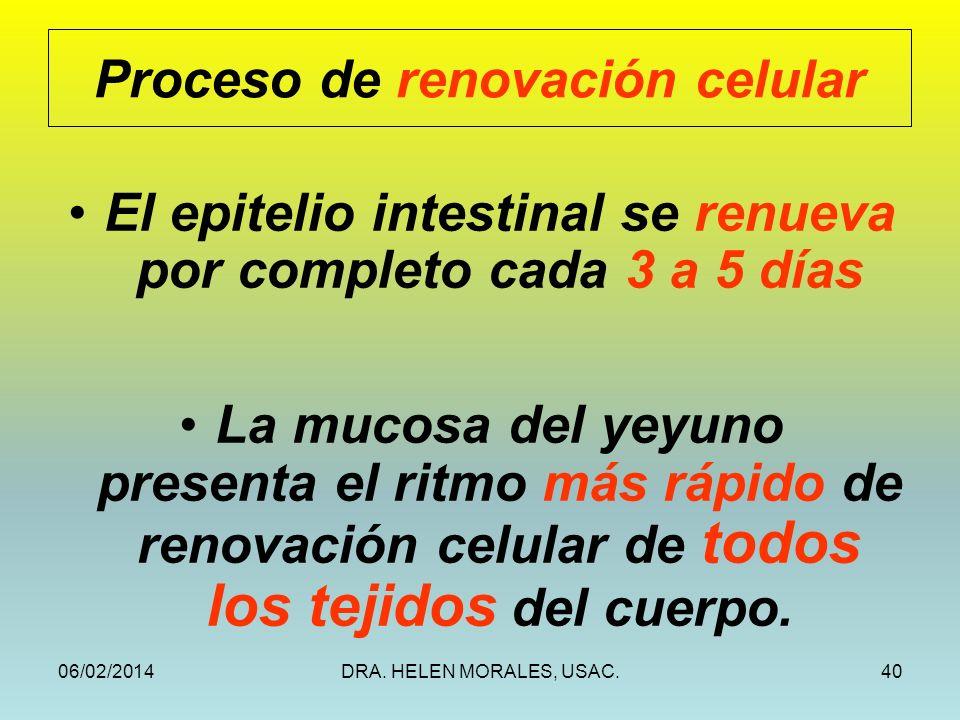 Proceso de renovación celular