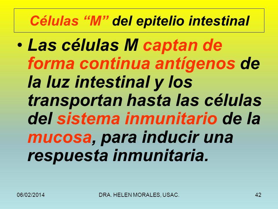 Células M del epitelio intestinal