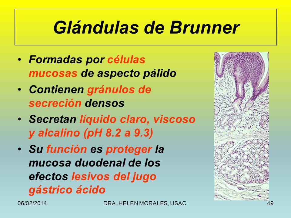 Glándulas de Brunner Formadas por células mucosas de aspecto pálido