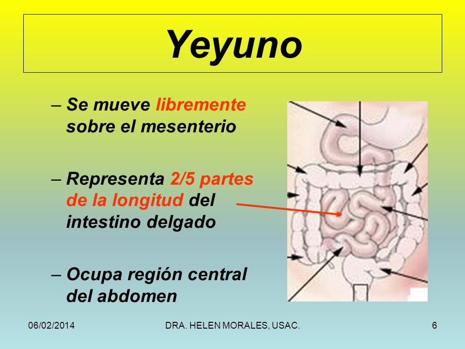 Yeyuno Se mueve libremente sobre el mesenterio