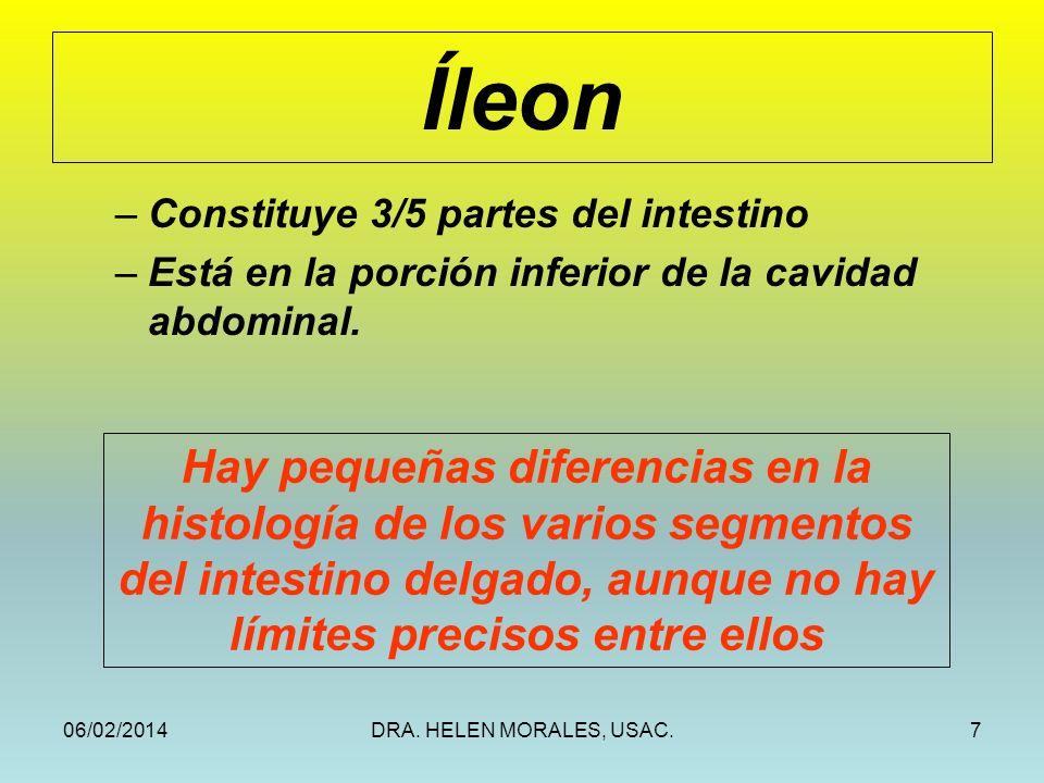 Íleon Constituye 3/5 partes del intestino. Está en la porción inferior de la cavidad abdominal.