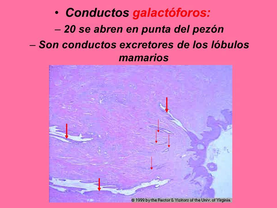 Conductos galactóforos: