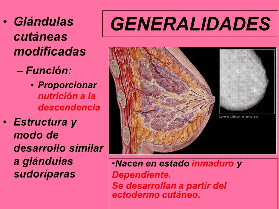 GENERALIDADES Glándulas cutáneas modificadas Función: