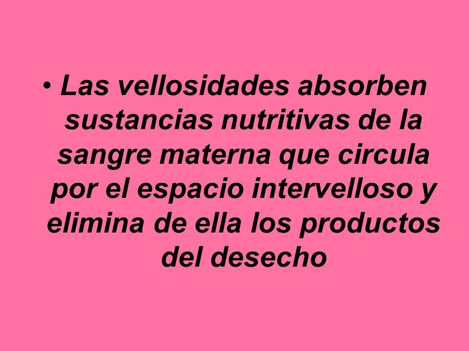 Las vellosidades absorben sustancias nutritivas de la sangre materna que circula por el espacio intervelloso y elimina de ella los productos del desecho