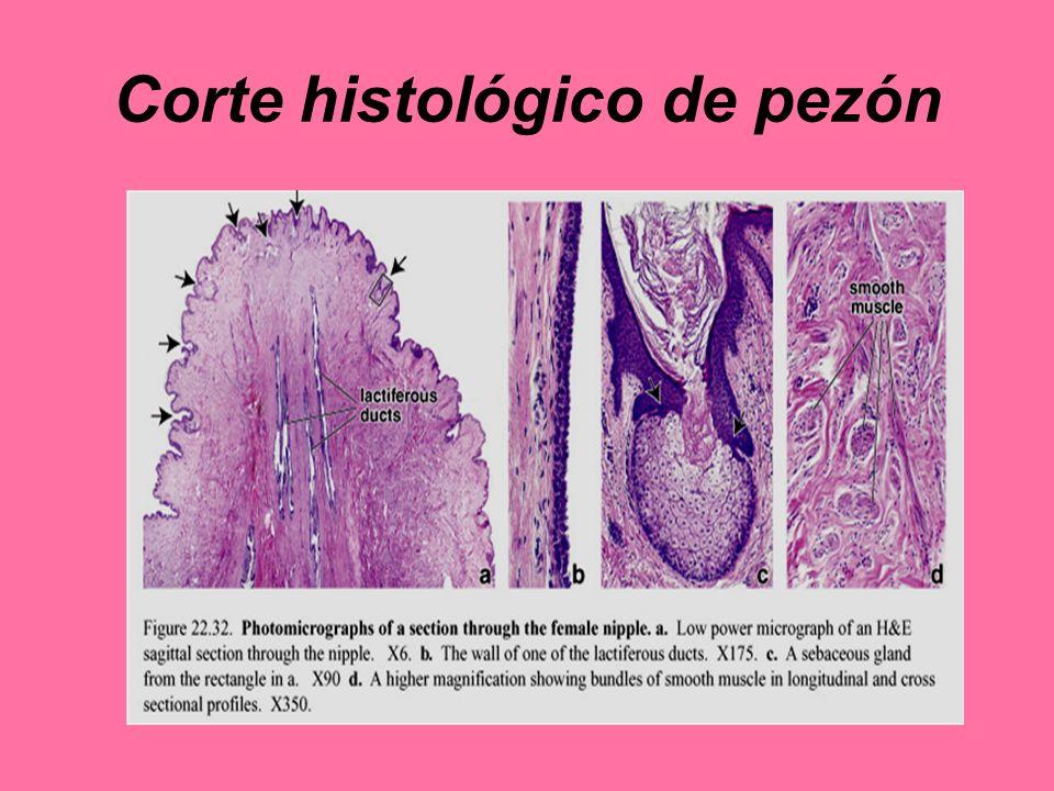 Corte histológico de pezón