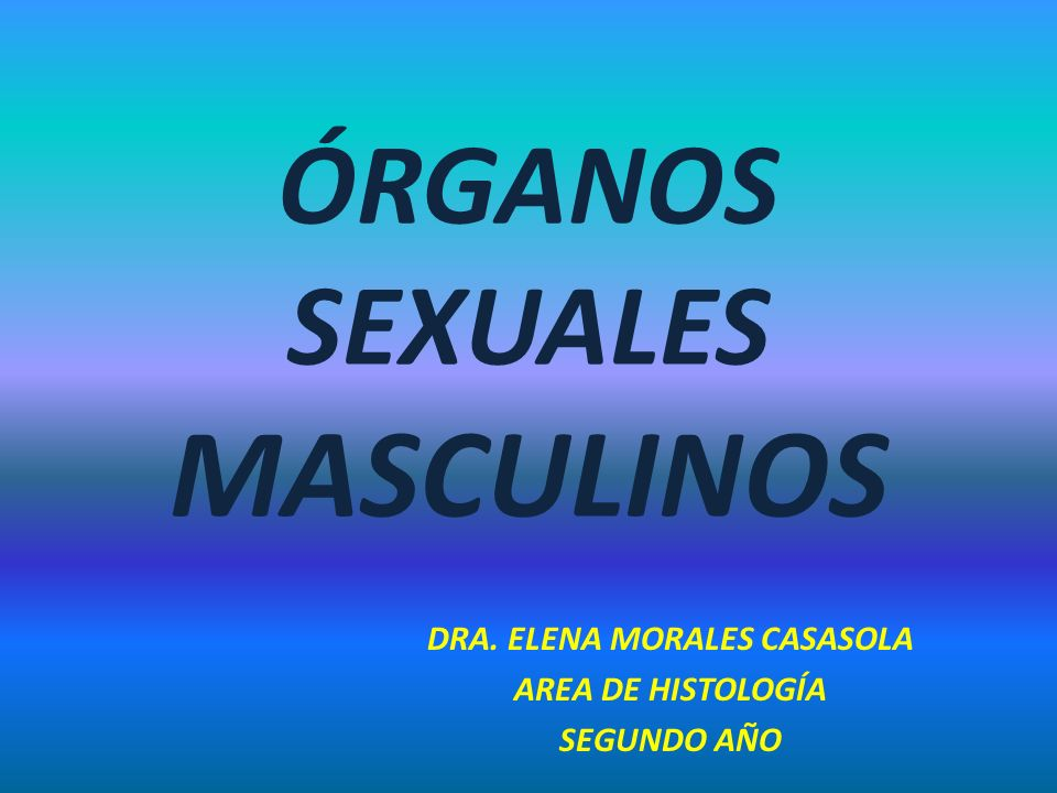 ÓRGANOS SEXUALES MASCULINOS