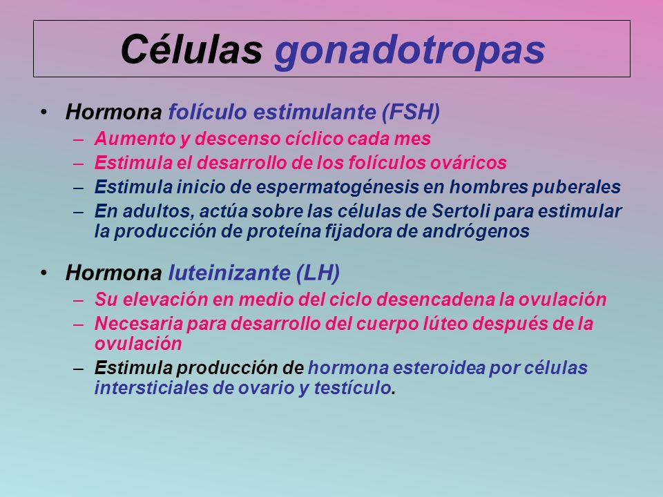 Células gonadotropas Hormona folículo estimulante (FSH)