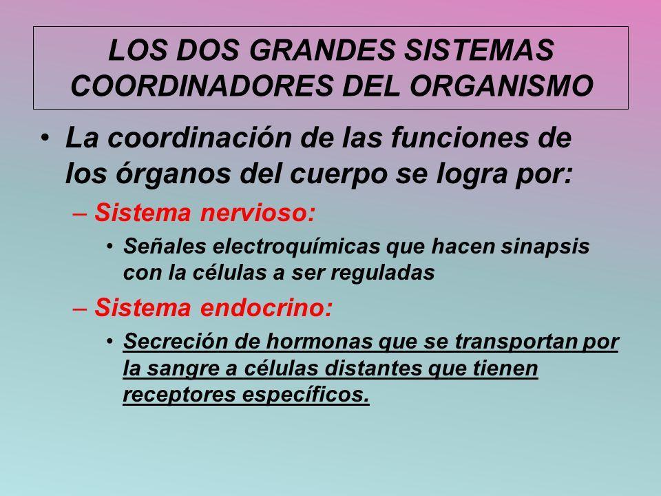 LOS DOS GRANDES SISTEMAS COORDINADORES DEL ORGANISMO