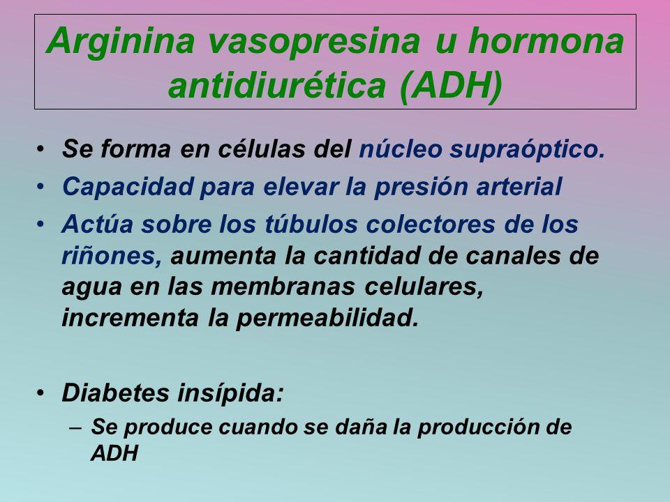 Arginina vasopresina u hormona antidiurética (ADH)