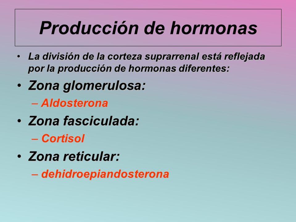 Producción de hormonas