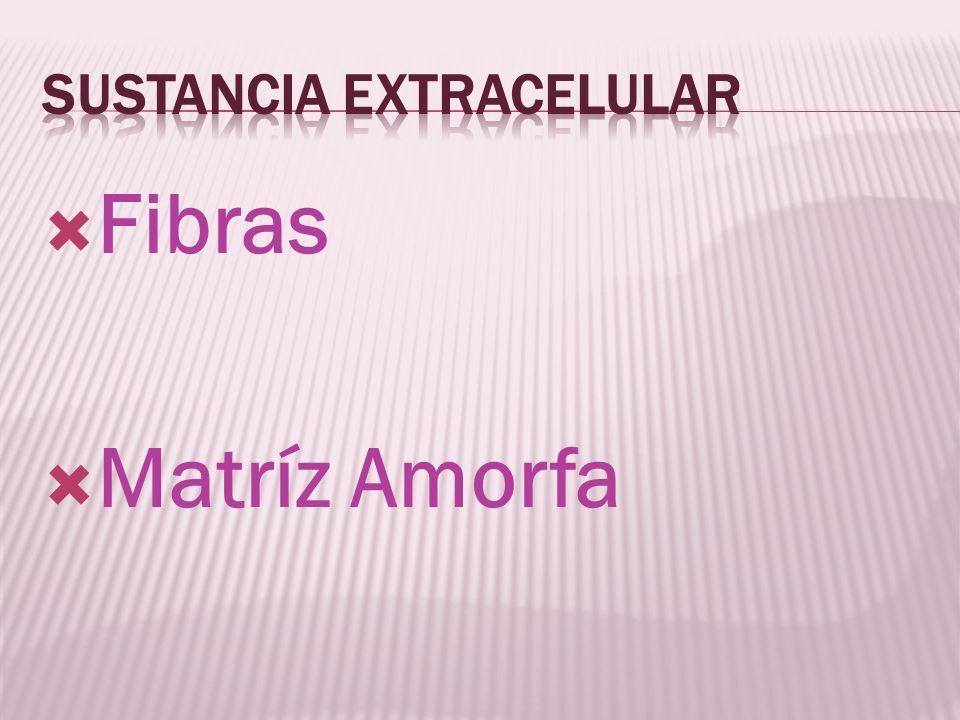 Sustancia extracelular