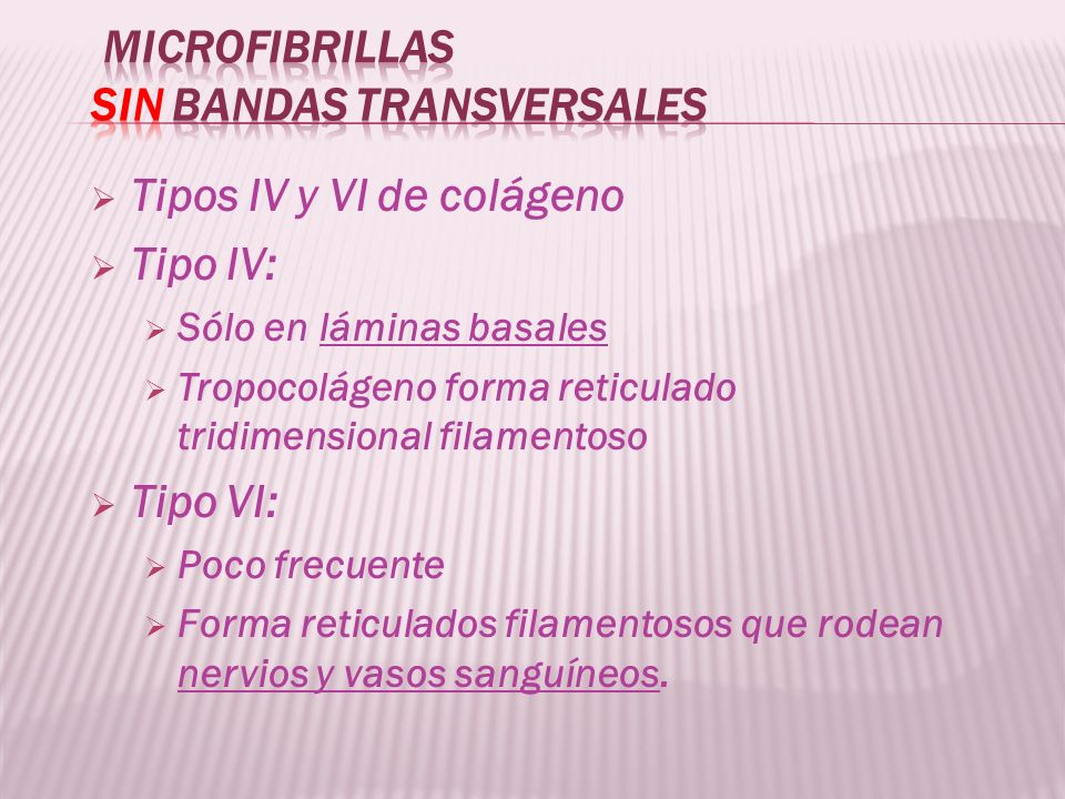 Microfibrillas sin bandas transversales