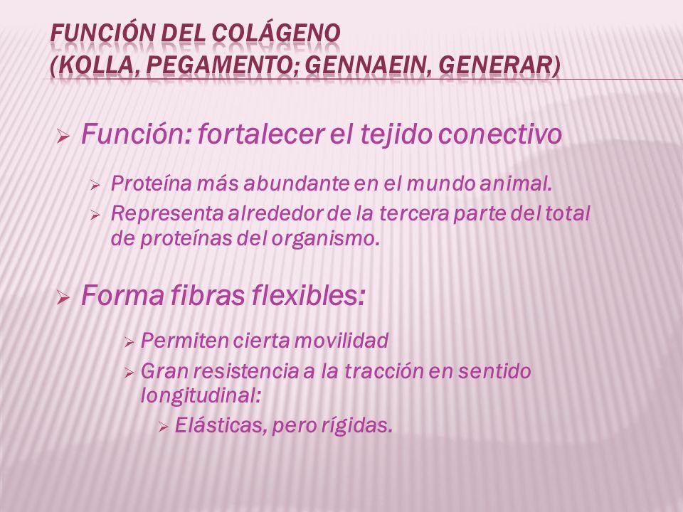Función del colágeno (kolla, pegamento; gennaein, generar)