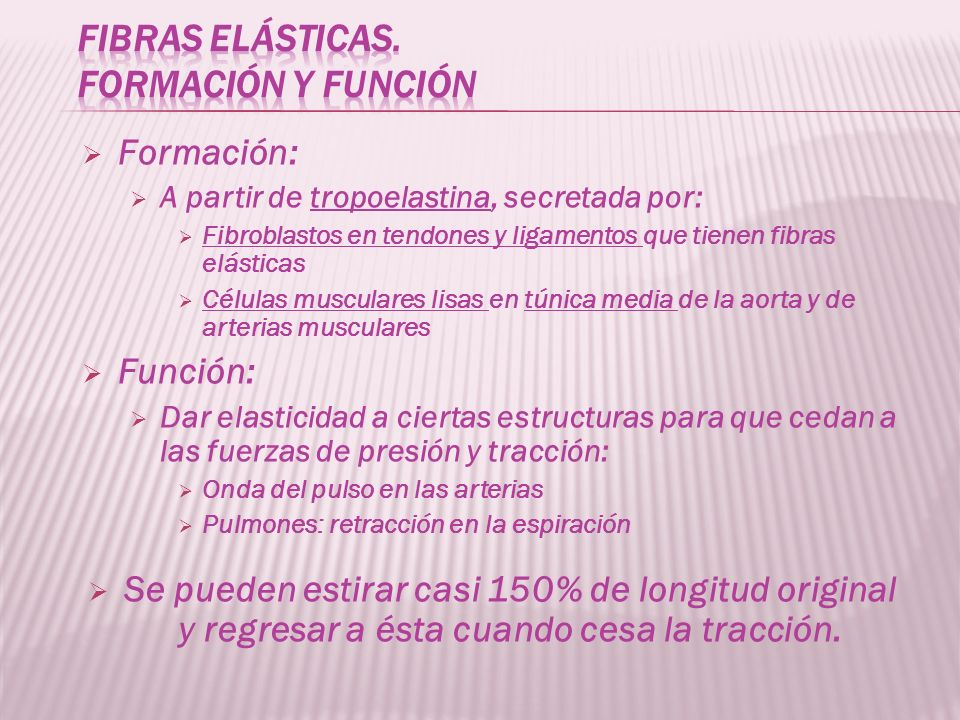 fibras elásticas. Formación y función