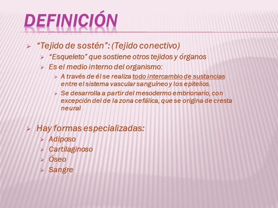 Definición Tejido de sostén : (Tejido conectivo)