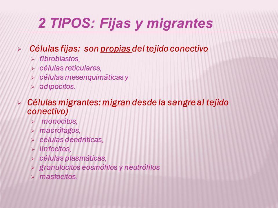 2 TIPOS: Fijas y migrantes